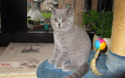 Alle unsere Kitten sind in ihr neues liebevolles zu Hause eingezogen.